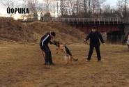 08_T_Alejnikova_Jorika