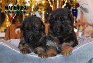 17_Puppies_Bacho_Verso_Boys_LH