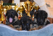 20_Puppies_Bacho_Verso_Boys