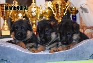 22_Puppies_Bacho_Verso_Boys