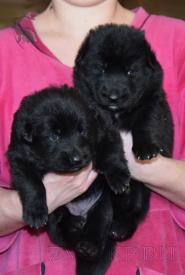 11_Puppies_Uragan_Furiya_Girls