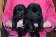 13_Puppies_Uragan_Furiya_Girls