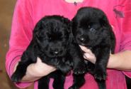 15_Puppies_Uragan_Furiya_Boys