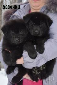 17_Puppies_Uragan_Furiya_Girls
