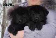 18_Puppies_Uragan_Furiya_Girls