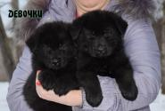19_Puppies_Uragan_Furiya_Girls