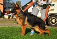 11_Puppies_Yam_Udachnaya_FLORANS
