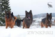 03_Winter_Dog