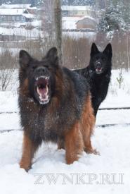 05_Winter_Dog