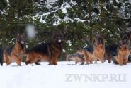 07_Winter_Dog