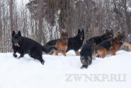 08_Winter_Dog