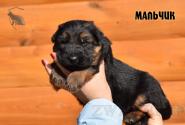 07_Puppies_Garry_Cikuta_Boy