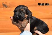 09_Puppies_Garry_Cikuta_Boy