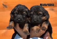 11_Puppies_Garry_Cikuta_Boys