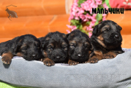 12_Puppies_Garry_Cikuta_Boys