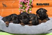 13_Puppies_Garry_Cikuta_Boys