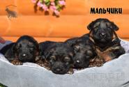 14_Puppies_Garry_Cikuta_Boys