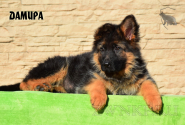 19_Puppies_Garry_Cikuta_DAMIRA