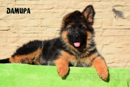 20_Puppies_Garry_Cikuta_DAMIRA