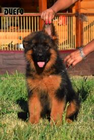 21_Puppies_Garry_Cikuta_DIEGO