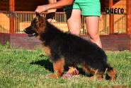 22_Puppies_Garry_Cikuta_DIEGO