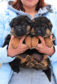 02_Puppies_Mike_Hloya