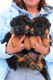 03_Puppies_Mike_Hloya