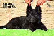 26_Puppies_Uragan_Valterra_Girl_LH