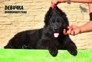 27_Puppies_Uragan_Valterra_Girl_LH