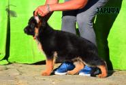 14_Puppies_Ux_Ichi_ZARIFA