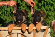 17_Puppies_Ux_Ichi_Girls