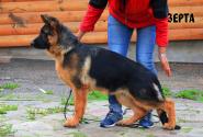 19_Puppies_Ux_Ichi_ZERTA