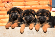 05_Puppies_Ux_Barrakuda
