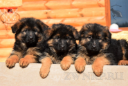 06_Puppies_Ux_Barrakuda