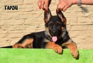 08_Puppies_Ux_Barrakuda_GARDI