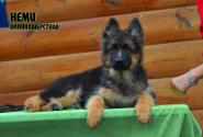 20_Puppies_Mac_Yolka_NEMI