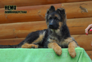 21_Puppies_Mac_Yolka_NEMI