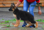 22_Puppies_Mac_Yolka_NEMI