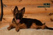 23_Puppies_Mac_Yolka_NEMI