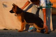 24_Puppies_Mac_Yolka_NEMI