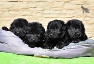 11_Puppies_Uragan_Avantura