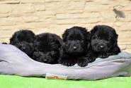 12_Puppies_Uragan_Avantura