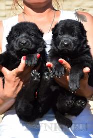 13_Puppies_Uragan_Avantura
