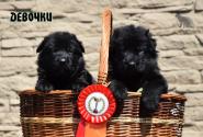 14_Puppies_Uragan_Avantura_Girls