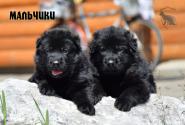16_Puppies_Uragan_Avantura_Boys