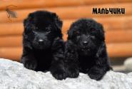17_Puppies_Uragan_Avantura_Boys