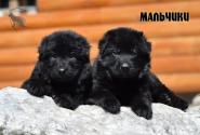 18_Puppies_Uragan_Avantura_Boys
