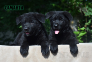 22_Puppies_Uragan_Avantura_SAMANTA
