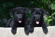 24_Puppies_Uragan_Avantura_SAMANTA