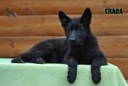 26_Puppies_Uragan_Avantura_SKALA